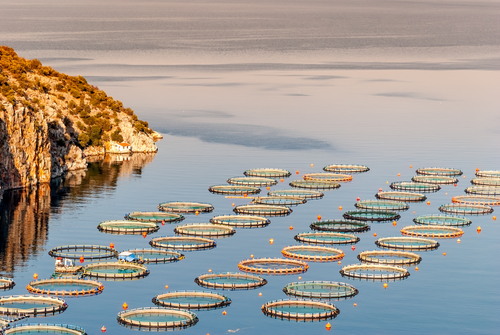 EU Aquaculture Farmed in the EU Regions